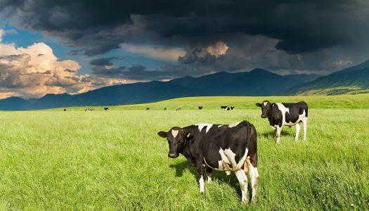 Chuvas provocam perdas na produção agropecuária