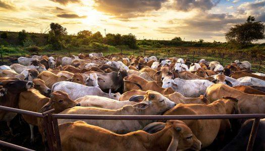 Comissão zera PIS/COFINS para rações bovinas e bubalinas