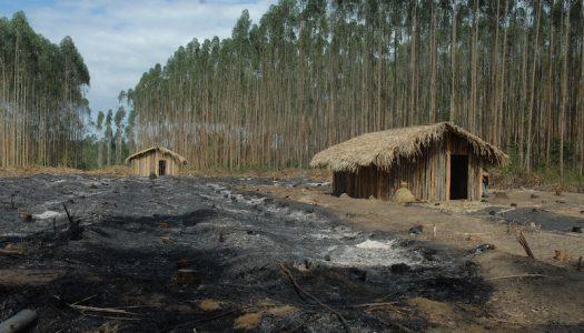 Presidente da Funai vai ao RS mediar conflito indígena