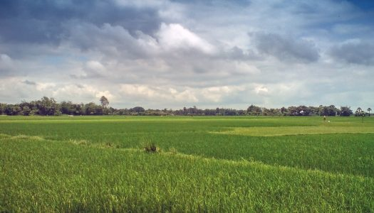 Ministra da Agricultura sinaliza com securitização para lavoura arrozeira