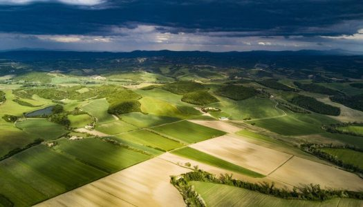Artigo – Arrendamento: conflito entre oportunidade e risco no campo