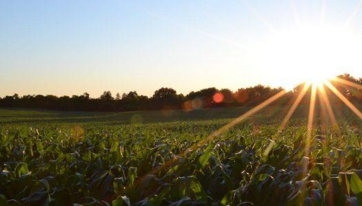 CMN aprova equalização do juro para linha de repactuação de dívidas agrícolas do BNDES