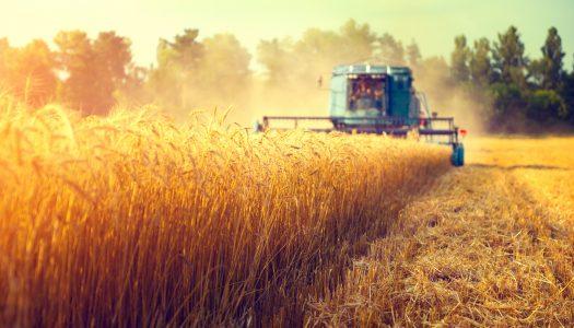 Ruralistas podem obter anistia de dívida de R$ 17 bilhões